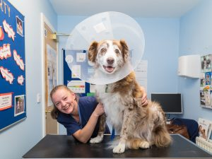 Dog Sat on Table Smiling at Camera with Cone on Head with Veterinary Nurse