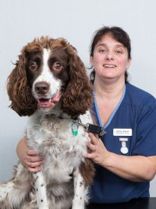 Kathy Bailey (Veterinary Nurse) Smiling While Holding Brown & White Dog