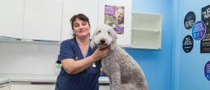 Grey Fluffy Dog Smiling at Camera with Shearbridge Staff Member at Side